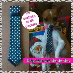 Corbata para perrito