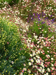 Companion Gardening - 8 easy-to-copy front garden ideas to make your home look attractive, stylish and welcoming. How use plants, paint and paths to transform your front garden. Garden Ideas Uk, Garden Ideas To Make, Garden Tips, Small Space Gardening, Garden Spaces, Garden Plants, Lavender Companion Plants, Companion Gardening, Small Front Gardens