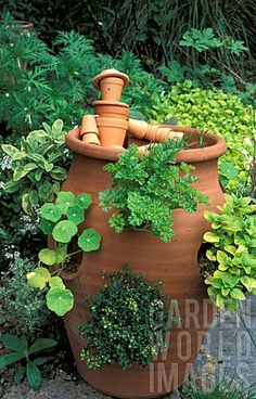 MIXED_HERBS_AND_STRAWBERRY_IN_LARGE_TERRACOTTA_CONTAINER