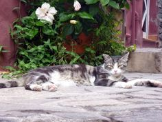Cat on La Gomera.