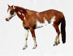 Horse Watercolor Painting Art Print   Animal by NovosadWatercolors