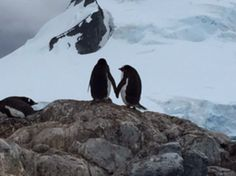 #Antartica lovers Ants, My World, Diva, Traveling, Lovers, Animals, Animais, Animales, Animaux