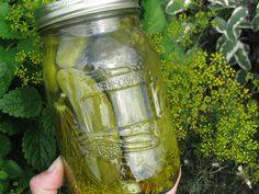 I'm trying this recipe next.Mennonite Girls Can Cook: Dill Pickles Canning Tips, Home Canning, Canning Recipes, Canning Dill Pickles, Pickles Recipe, Vinegar Uses, Red Chili Peppers, Recipe For Mom, Bon Appetit