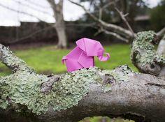 #origami #papiroflexia