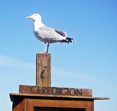 Seagull at New Quay, Wales Wales, Outdoor Decor, Welsh Country