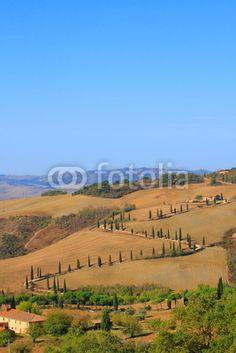 Zypressen,Kurve,Hügellandschaft,Toskana,Val d Orcia,La Foce hochformat titelbild