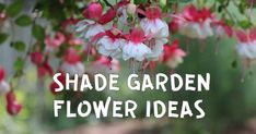 6 Colorful Flowering Plants for Shade Gardens Flowering Shade Plants, Goat Pen, Pen Art, Shade Garden, Colorful Flowers, Planting Flowers, Gardens, Shades, Ideas