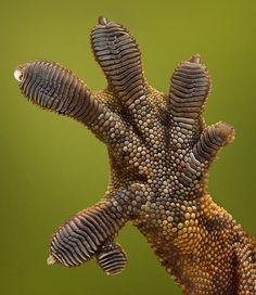 "Harvey sends you a ""high five"" for you recent accomplishments.  Good Job.  ~~  Houston Foodlovers"