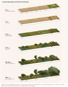 Land Rehabilitation Phasing. Four types of land rehabilitation strategies — farming, grazing, ecological, and shelterbelts — are shown developing over time. The first three would be planted with cuttings while shelterbelt areas would be planted with seedlings. Christina Milos.