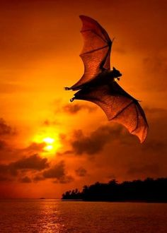 Bat. Nature's insect repellent. We sit outside mosquito free because of these lovely creatures. Save the bat.