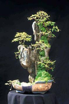 Multi level bonsai