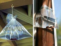 7 solutions maison pour lutter contre les mouches dans la maison - Améliore ta Santé