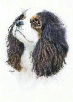 Cavalier King Charles by Karen Hull Animal Paintings, Animal Drawings, Pencil Drawings, Art Drawings, Color Pencil Art, Colored Pencil Artwork, Polychromos, Dog Portraits, Dog Art