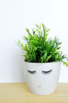 """plants are just cooler when they look like """"hair"""""""