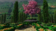 HD Nature wallpaper
