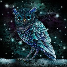 Owl - Tom Charlesworth Illustration