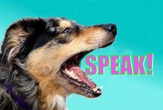 Dog Training Classes, Dog Training Techniques, Dog Training Tips, Training Online, Leash Training, Training Videos, Potty Training, Game Mode, Dog Minding