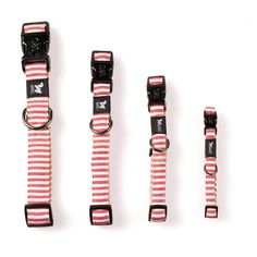 Red and White Puppy Collar