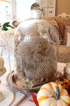 Harvest Under Glass