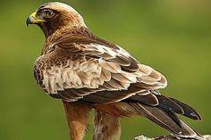 #Iberdrola contribuye a la protección de las #aves y su entorno
