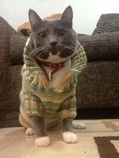 My sister's cat wearing a sweater my mom made for him. - Imgur