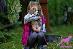 www.lapitropy.com  #bluebeagle #tricolorbeagle #beagle #lapitropy #puppies