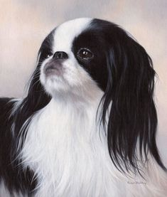 Animal paintings, animal prints and pet portraits. Beautiful oil on canvas fine art by wildlife artist Rachel Stribbling. Cute Puppies, Cute Dogs, Dogs And Puppies, Doggies, Japanese Chin Puppies, Pekingese Puppies, Chihuahua, Wildlife Art, Animal Paintings