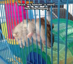 Bruce is weird... He may be weird ,but he looks like he was trying to escape.During his struggle to get out from the bars that kept him imprisioned. Bruce became exhausted. He decided he their was no hope. Fuck this shit!!! I give up. I sleep now and tomorrow I will review my findings. For now I will sleep.