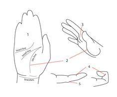 Human Anatomy Fundamentals: How to Draw Hands - Tuts+ Design & Illustration Tutorial