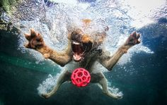 Underwater dog photography. So cool