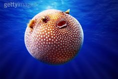 Nature's ugly, weird and wonderful creatures from around the world Underwater Creatures, Underwater Life, Ocean Creatures, Deep Blue Sea, Weird And Wonderful, Beautiful Things, Sea World, Fauna, Ocean Life