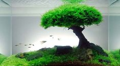 "Learn how to design an ""aquascape"" for your aquarium! #green #DIY #garden"