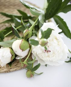 White peonies. http://www.amazon.com/The-Reverse-Commute-ebook/dp/B009V544VQ/ref=tmm_kin_title_0