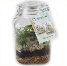 Canning jar terrarium