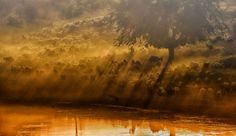 lac-arbre