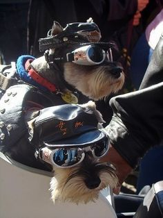 Rescue Dogs Ready to Roll
