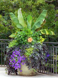 bac à fleurs avec des pétunias, des plantes retombantes et un bananier