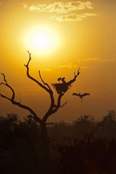 Parque Nacional do Pantanal Matogrossense Jabiru nest at Sunrise Amazing Sunsets, South America Travel, Sunset Photography, Nature Images, My Sunshine, Wonderful Places, National Parks, Scenery, Storks