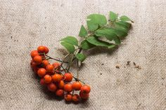 Cooking With Rowan Berries