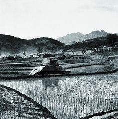 装甲車が遺棄された田んぼに、植えられたばかりの苗が並ぶ。戦争の傷跡と再建への努力が一目でわかる。 北朝鮮の1950年代の様子をとらえた貴重なモノクロ写真【画像】