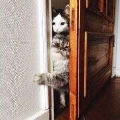 Cat pics - 40 Pics