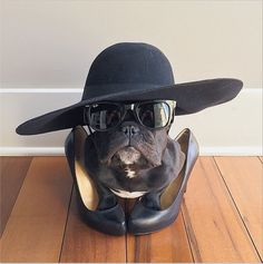 Pin for Later: The Most Fashionable Dogs on Instagram Trotter