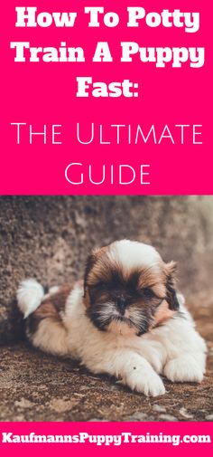 Learning how to potty train a puppy can be a challenge…. I know!  But there is a way to train this with great success. This way accidents will be few and your new puppy will know what to do within only a few days of learning. Read at kaufmannspuppytraining.com @KaufmannsPuppy