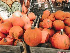 𝚌𝚕𝚊𝚒𝚛𝚎'𝚜 𝚙𝚒𝚗 ~ 𝚝𝚑𝚎 𝚘𝚗𝚎 𝚒𝚗 𝚝𝚑𝚎 𝚖𝚒𝚍𝚍𝚕𝚎 𝚘𝚏 𝚋𝚘𝚝𝚑 𝚋𝚒𝚗𝚜 𝚒𝚜 𝚖𝚒𝚗𝚎! 𝙰𝚗𝚢 𝚌𝚊𝚛𝚟𝚒𝚗𝚐 𝚒𝚍𝚎𝚊𝚜? 𝙻𝚎𝚝 𝚖𝚎 𝚔𝚗𝚘𝚠 𝚒𝚗 𝚝𝚑𝚎 𝚌𝚘𝚖𝚖𝚎𝚗𝚝𝚜 𝚋𝚎𝚕𝚘𝚠! Fall Tumblr, Autumn Aesthetic, Fall Baby, Happy Fall, Fall Halloween, Halloween Decorations, Fall Things, Seasons, Crafty