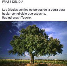 #citas #frases #frasesnaturaleza #frasedeldia #céspedsintetico #jardinería #paisajismo #gardening #landscape #artificialgrass #grass #padel #Valladolid  #flores #plantas #naturaleza #tenis #podasenaltura #talas #árbol #flor #pasiónporelverde