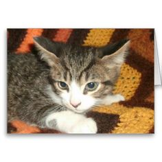 Kitten Greeting Cards! #cute #kitten #zazzle #store #cat #meow #customize #gift #present http://www.zazzle.com/conquestkitty*