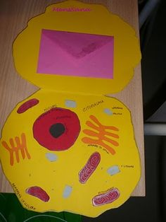 Lapbook Cell