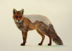 Animais e paisagens naturais misturados na dupla exposição de Andreas Lie