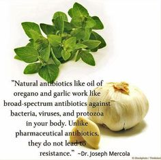 Garlic and Oil of Oregano- natural antibiotics!