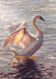 Matthew Hillier (b. British-American) The Swan, 2015 Beautiful Swan, Beautiful Birds, Animals And Pets, Cute Animals, Swan Pictures, Swan Painting, Animal Totems, Swan Lake, Animal Paintings